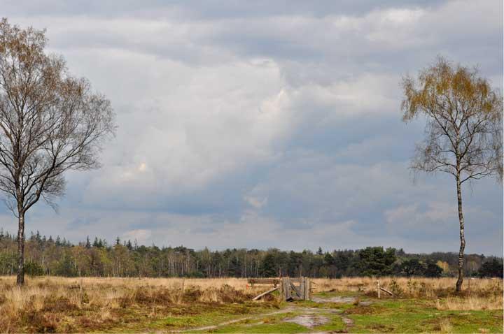 Omgeving Leersum - Huisartsen de Groenling